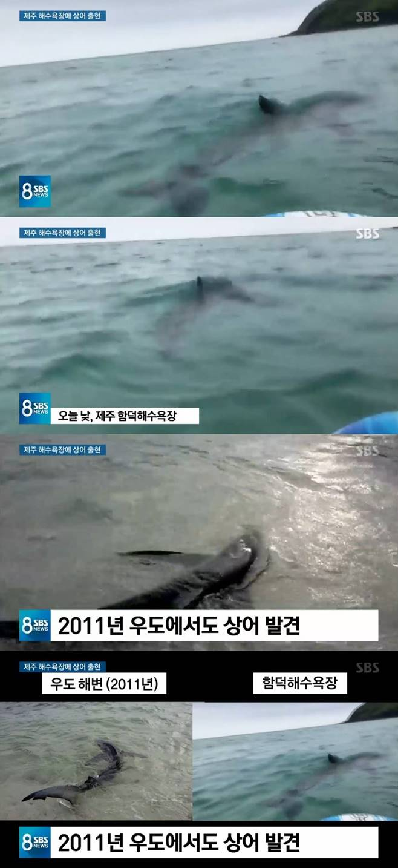 제주도 상어 제주 함덕해수욕장